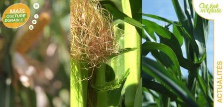 site maïs culture durable