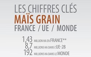 chiffres clés 2019 maïs grain