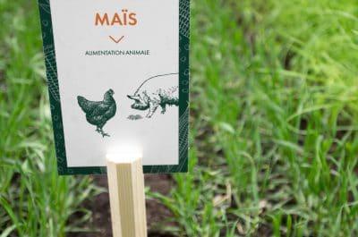 le maïs composante de l'alimentation animale