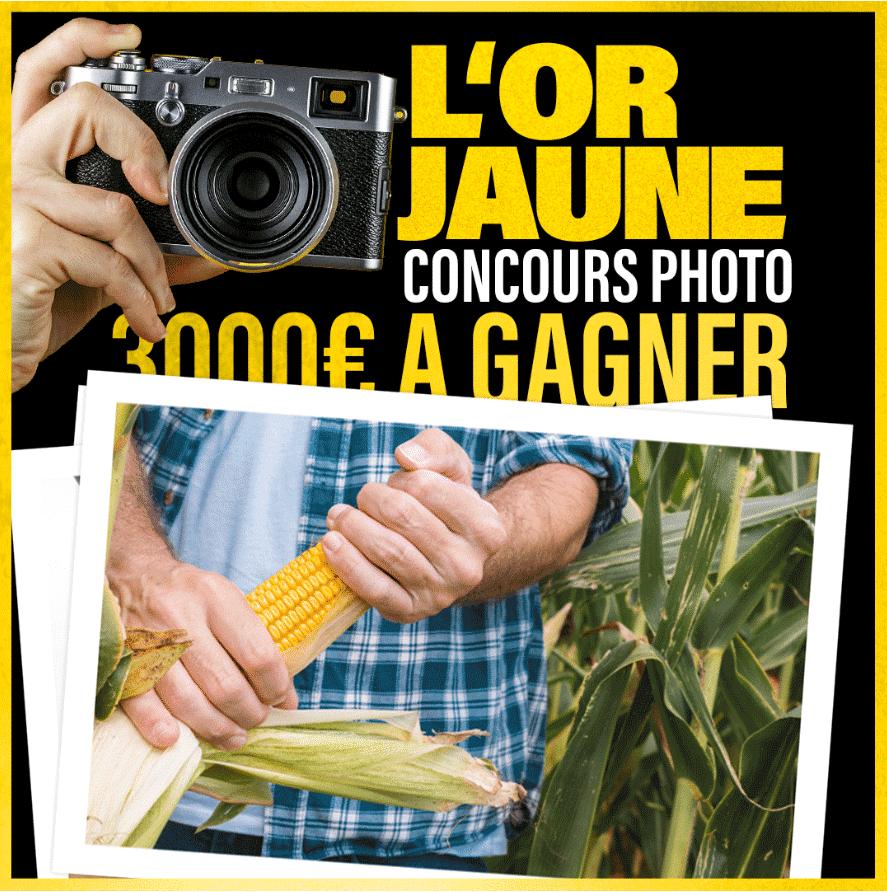 concours-photo-or-jaune