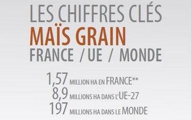 Chiffres-Maïs-Grain-2020
