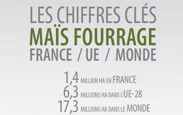 Chiffres-Maïs Fourrage-2020