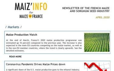 vignettede la newsletter maizinfo anglais
